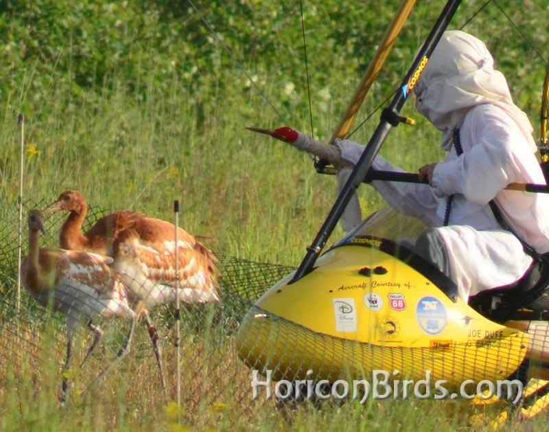 Pilot Joe Duff greets crane chicks, photo by Pam Rotella