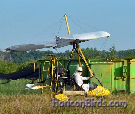 Joe Duff training crane chicks at White River Marsh, Summer of 2012.  Photograph by Pam Rotella.