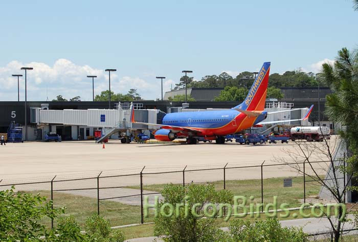 View of airport from Norfolk Botanical Garden, photo by Pam Rotella