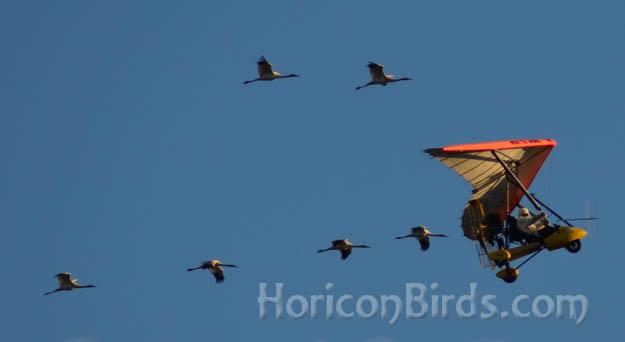 Pilot Richard van Heuvelen departs Pecatonica, Illinois with all 6 juvenile cranes on 12 October 2012.  Photo by Pam Rotella