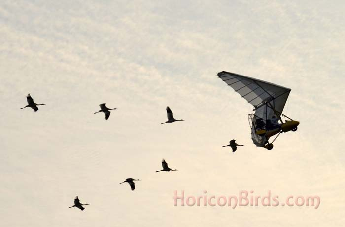 Whooping cranes following OM ultra-light pilot Brooke Pennypacker on 9 September 2013.  Photo by Pam Rotella