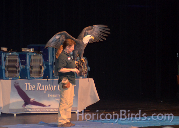 Raptor show, 18 January 2014.  Photo by Pam Rotella