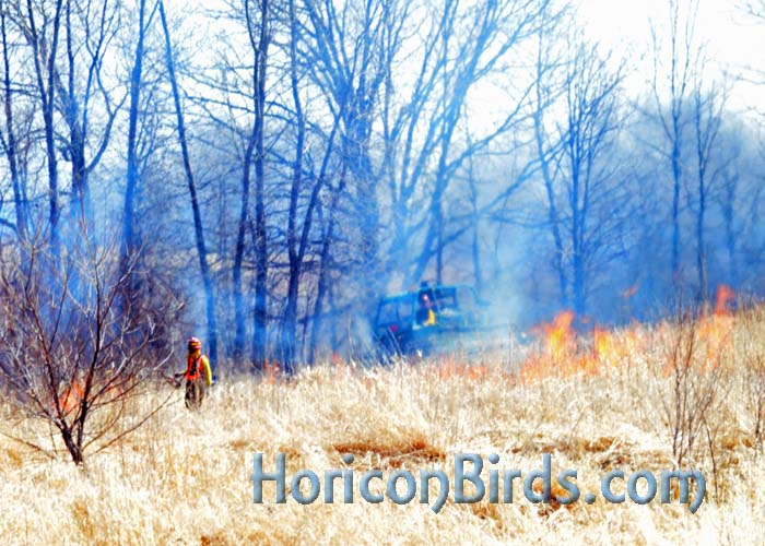 Prescribed burn at Horicon, visible from Highway 49.  Photo by Pam Rotella